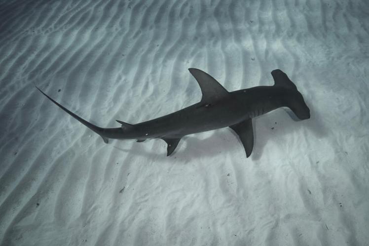 Photo by Elisabeth Lauwerys at Oceans Below